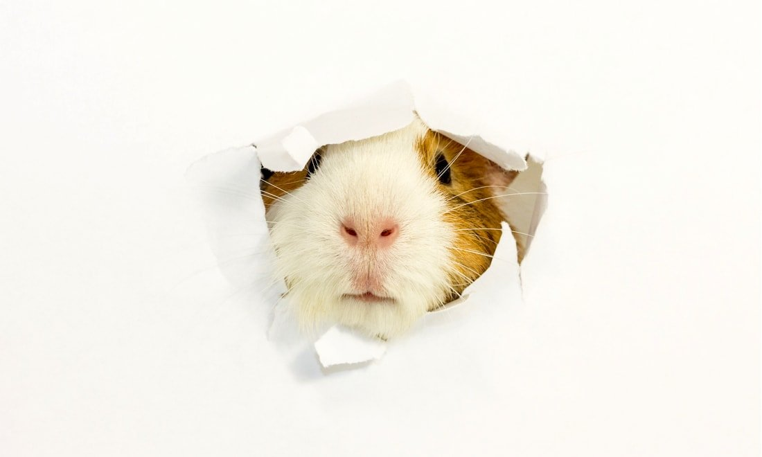 Who Will Be Last In Line Within The Beauty Industry To Be Cruelty-Free?